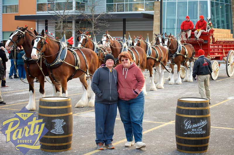 Clydesdale Portraits 113.jpg