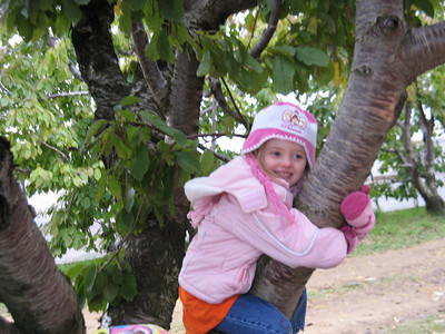 Elena's Preschool trip to Spicer Orchard