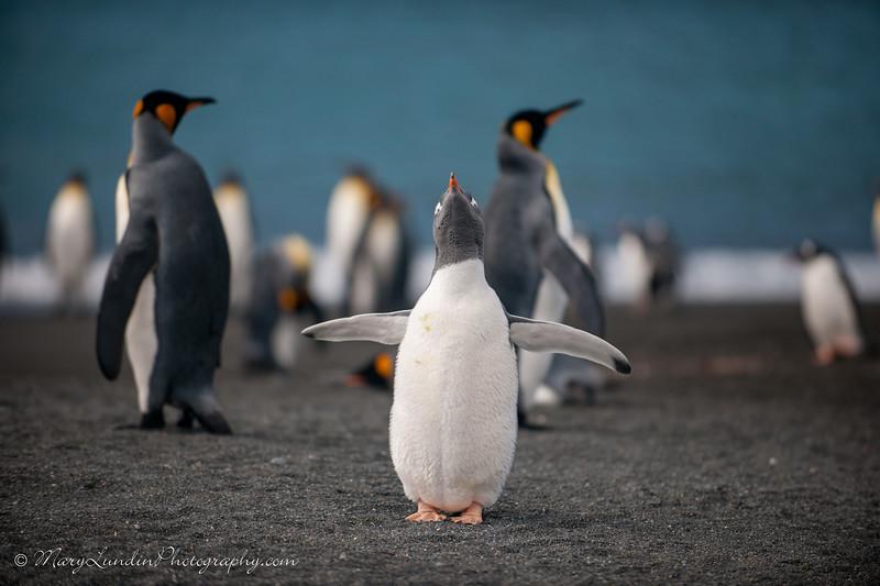Antarctic-92