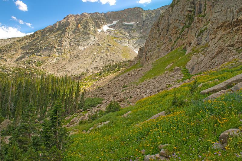 Wild Basin wildflowers.jpg