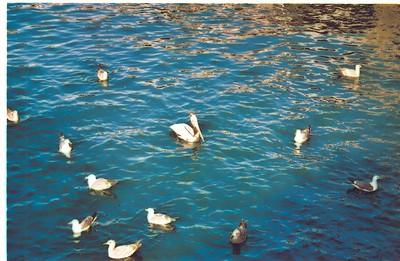 Monterey, April 2004