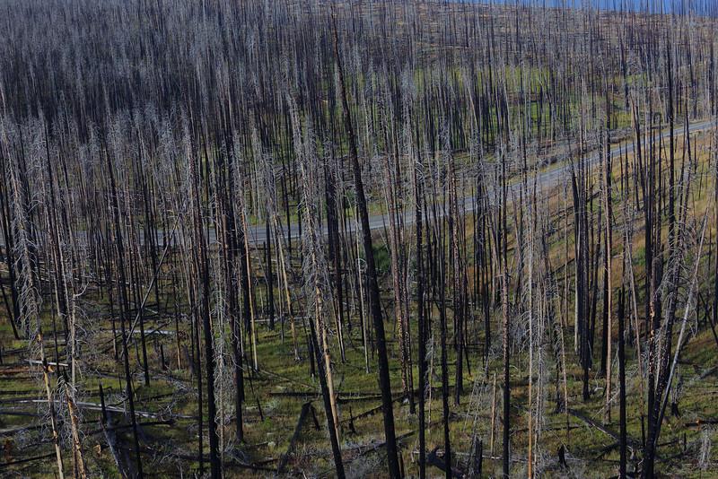 Yellowstone 108.JPG