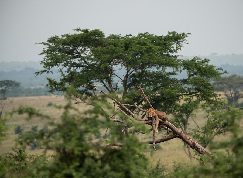Uganda_T_QE-1136.jpg