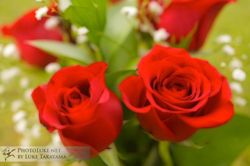Flowers DSC_1673 copy.jpg