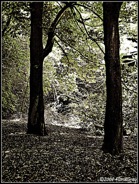 Guardians of the Grove  ©2008 FlorieGray