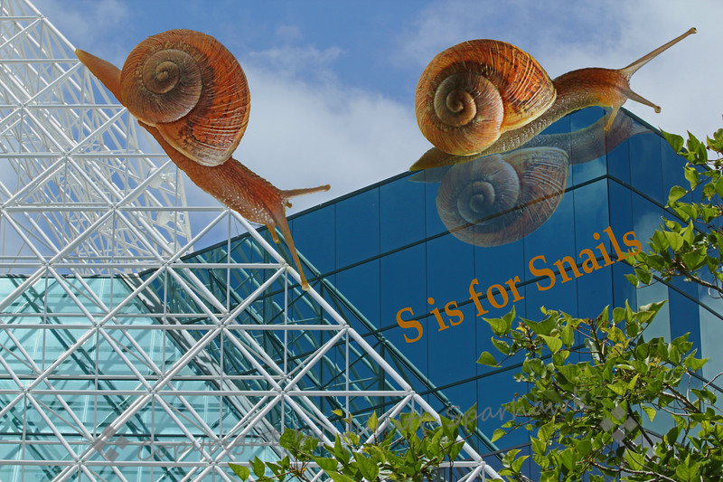 S is for Snails