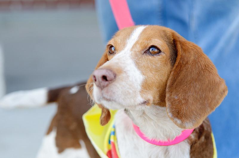 20110312 PetSmart Adoption Event-61.jpg
