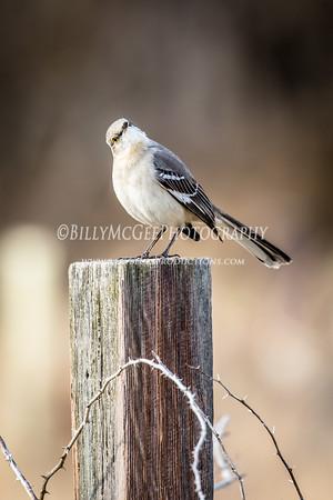 Birds in the Field - 02 Apr 2015
