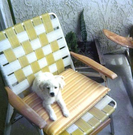 garys_dog_villa_la_paz.jpg