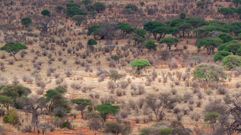 Tanzania-Tarangire-National-Park-Lemala-Mpingo-Ridge-40.jpg