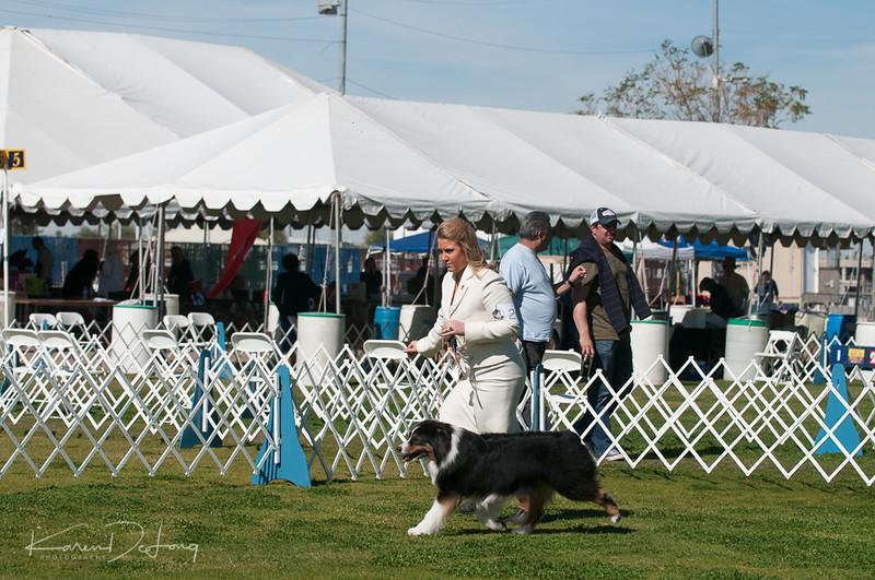 20170205_Australian Shepherds_Lost Dutchman Kennel Club-208.jpg