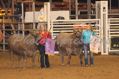 Arena Grand Champion Showing