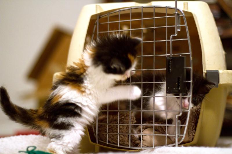 Open cage.jpg