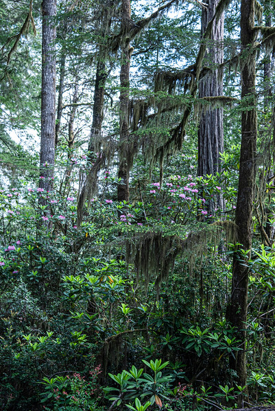 redwoodsFin-0921.jpg