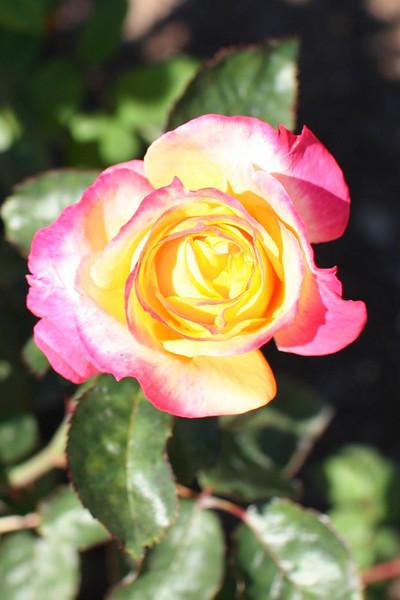 from the Rose Walk at Lake Junaluska, NC