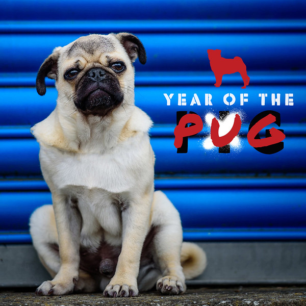 Year of the pug Facebook ads-solo.jpg