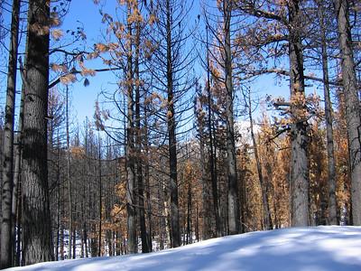 Hope Valley and Tahoe - Jan 2009