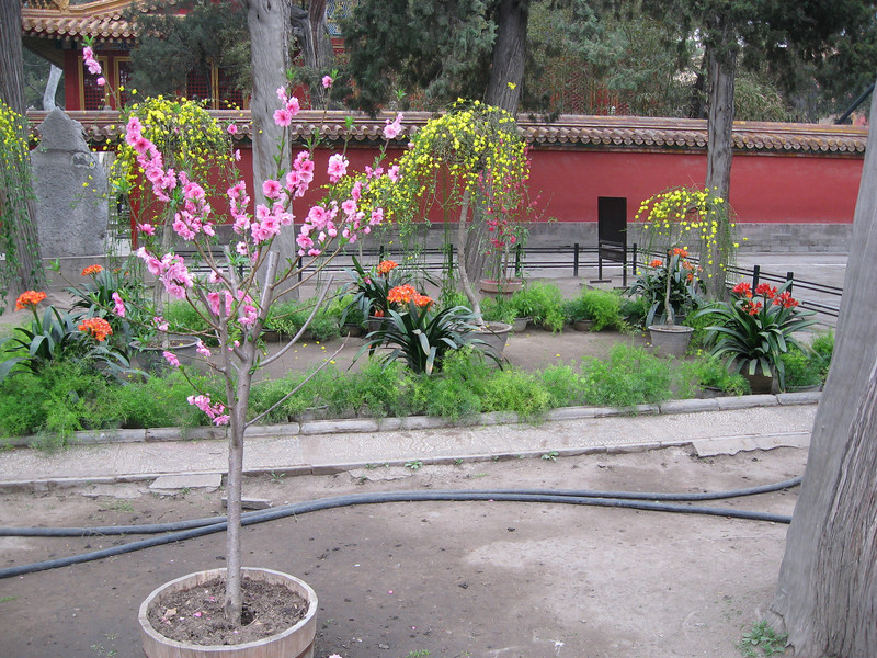 Imperial Garden Hose