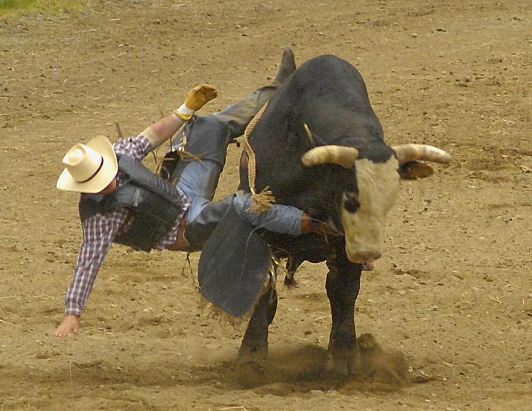 Coombs Bullarama 2008-2-32A.jpg