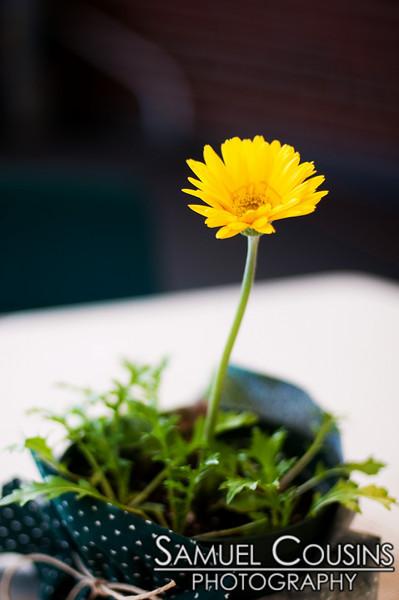 A dandelion in a pot