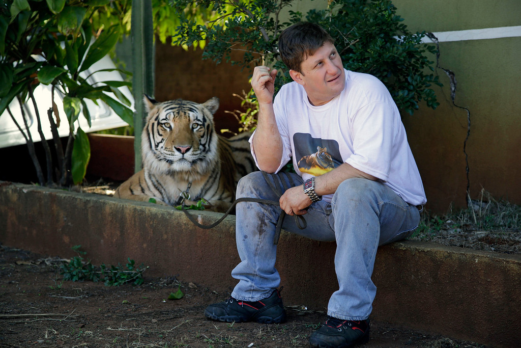 . Ary Borges sits with one of his nine tigers in his backyard in Maringa, Brazil, Thursday, Sept. 26, 2013. Borges says it all started in 2005 when he first rescued two abused tigers from a traveling circus. He defends his right to breed the animals and says he gives them a better home than they might find elsewhere in Brazil. (AP Photo/Renata Brito)