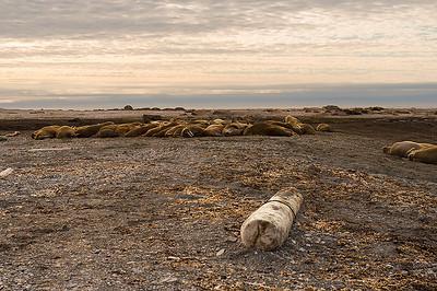 Svalbard: Lagoya Island