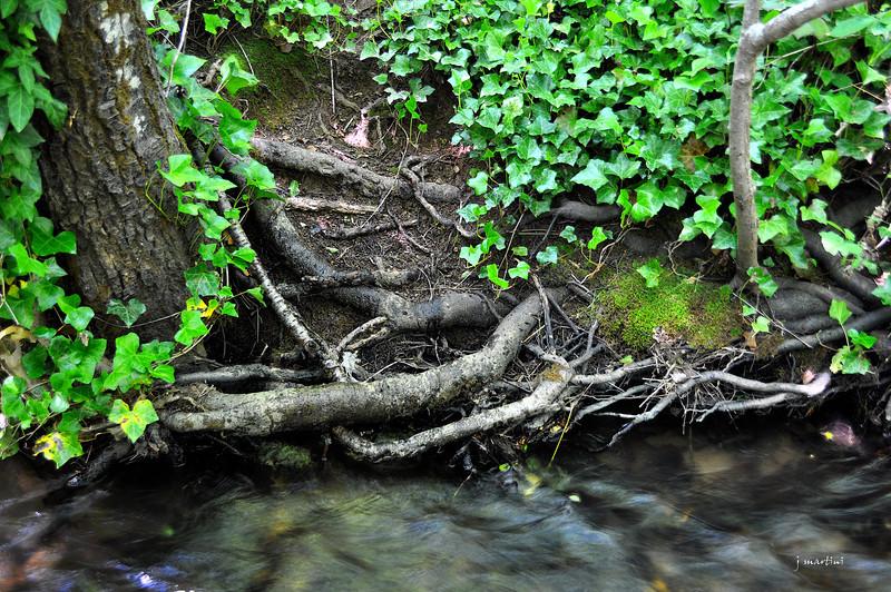 root system 5-29-2012.jpg