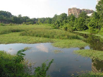 Balston Beaver Pond 6