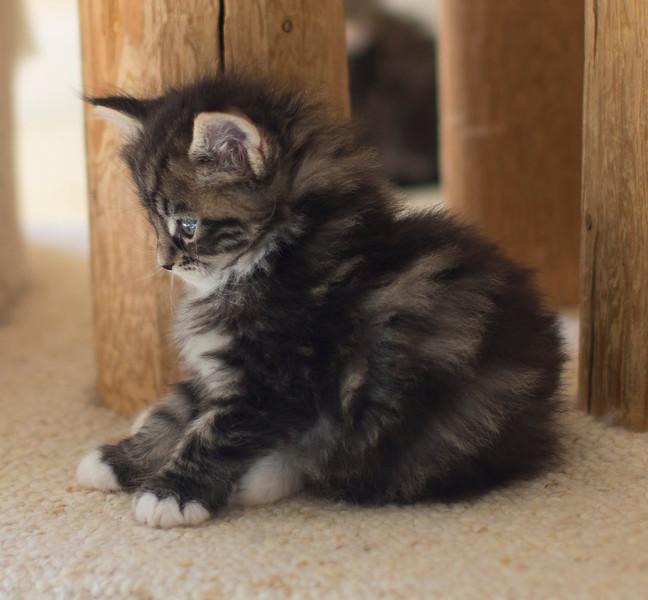 Kittens297.jpg