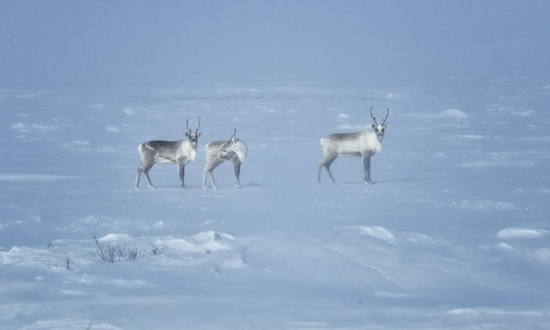 The Land Trip, Nunavut