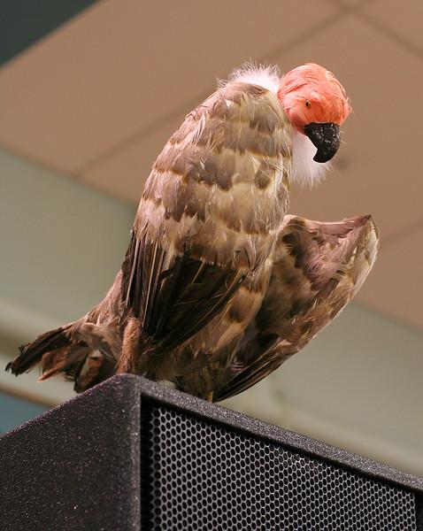 7045 LHStomp vulture.jpg