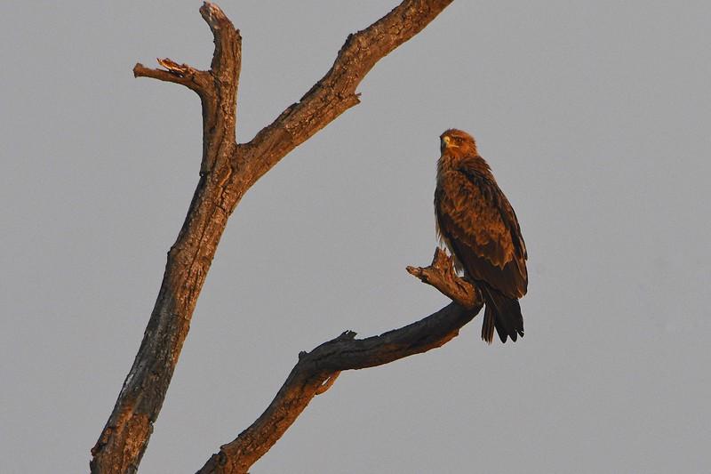 kruger-eagle01.jpg