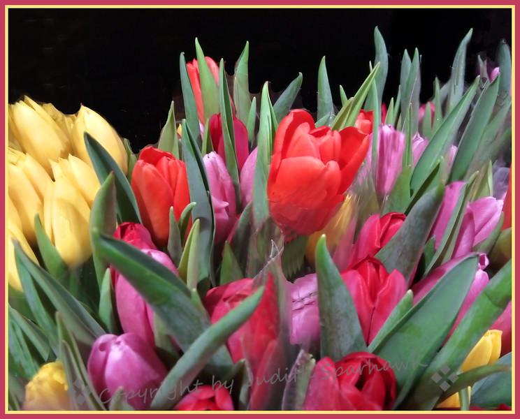Lots & Lots of Tulips - Judith Sparhawk