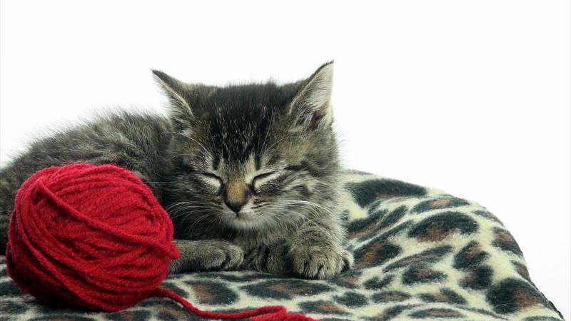 Kittens_tabby_009.mov