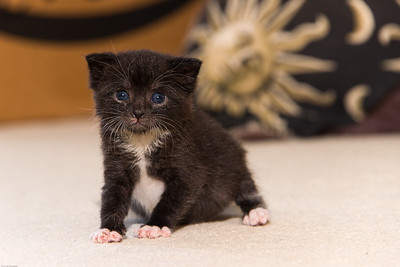 Abandoned Kitten # 2
