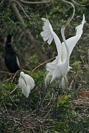 Birds March 2009