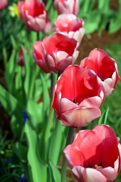 Flowers 1-2.jpg