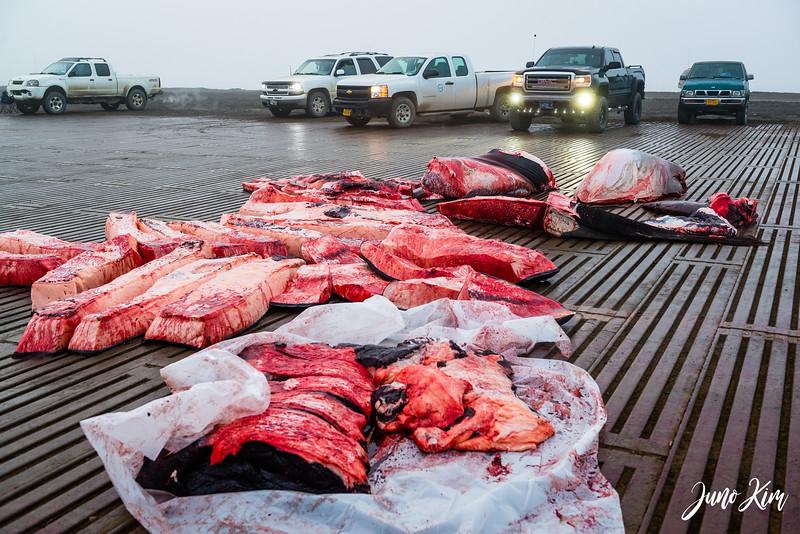 Utqiagvik Whaling-6105095-Juno Kim.jpg