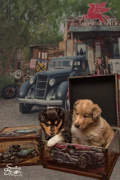Charlie's Pups Week 4