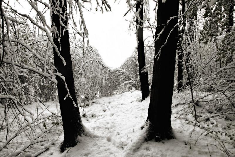Late April Snow-8.jpg