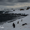 Day 4 Half Moon Island, South Shetland Islands