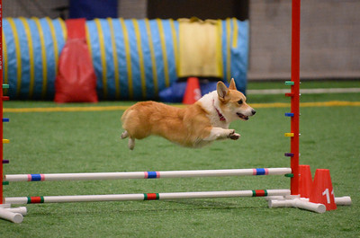 York County Dog Training Club AKC Agility Trial October 13-14