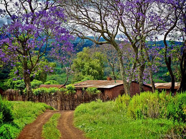 Images from Kenya and Tanzania