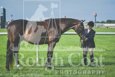 2015 Totally Thoroughbred Horse Show In Hand
