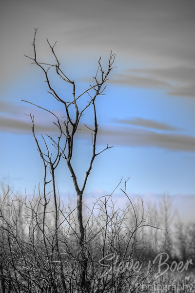 Dead tree on pale background