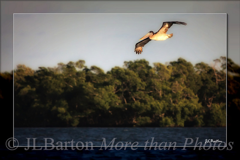 Evening Flight