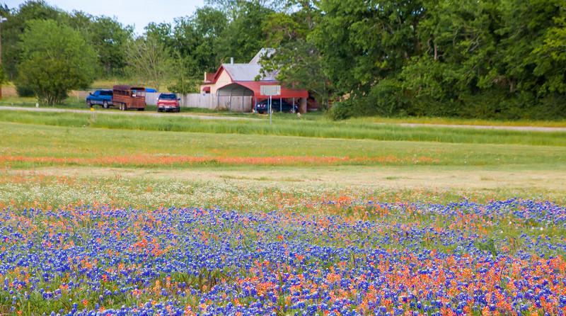 2016_4_9 Texas Wildflower Shoot-8872.jpg