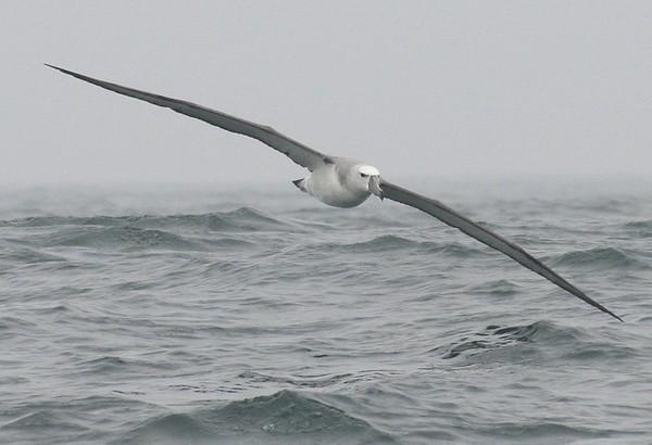 Birds , at sea , in Flight , on land