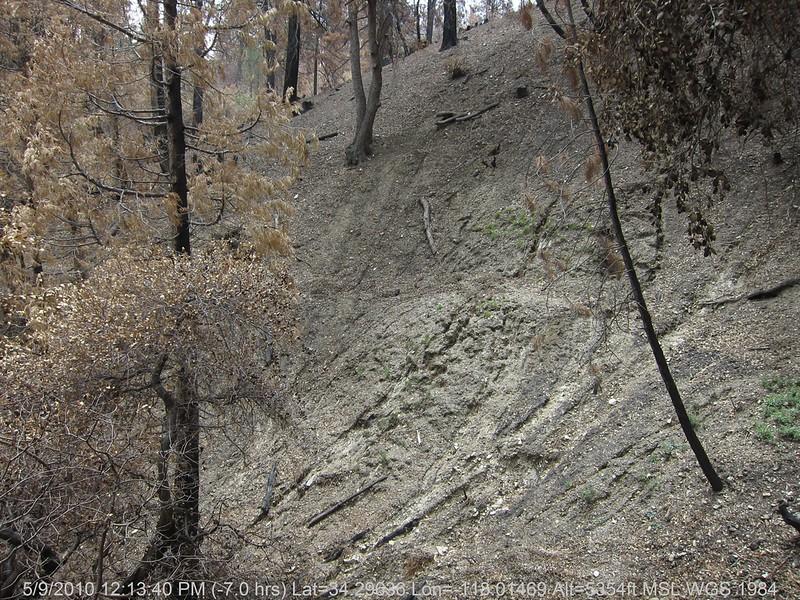 20100509097-Trail Recon, Silver Moccasin-Charlton Connector Trail.JPG