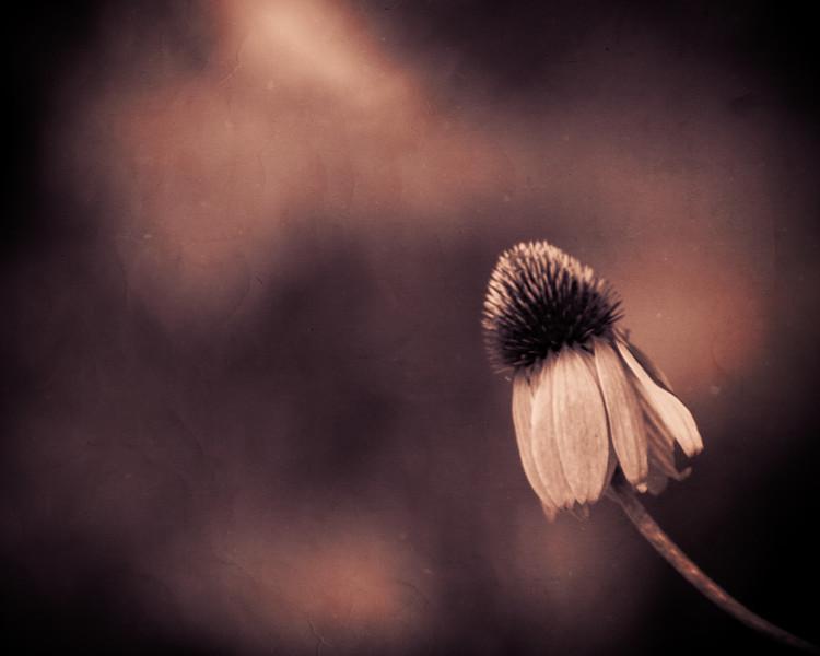 Flower split tone texture-.jpg